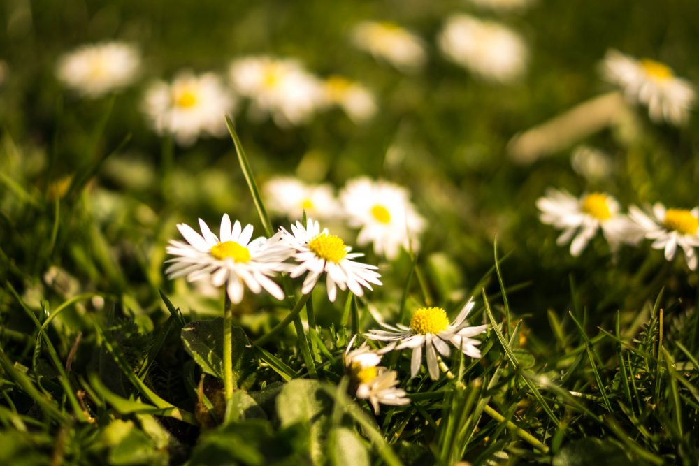 flowers-summer-grass-meadow